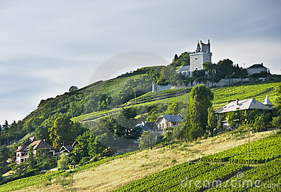French chateau and vineyards