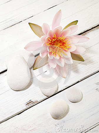 Water lily and pebbles