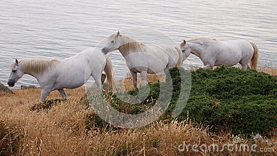 White Horses on Anglesey, Wales