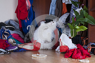Cat looking for things in the wardrobe mistress