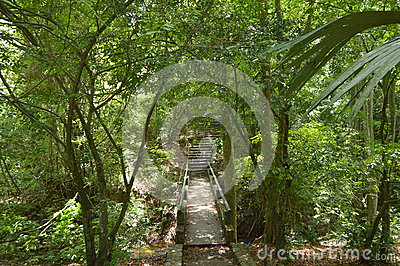 Stairs to the natural