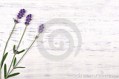 Lavender flowers on white wood table background