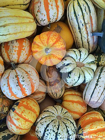 Gourds and Squash