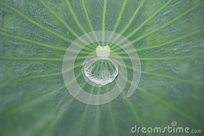 Water drop inside leaf