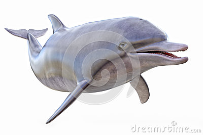 Dolphin isolated