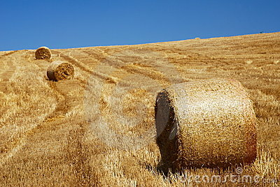 Stubble field and straw bales