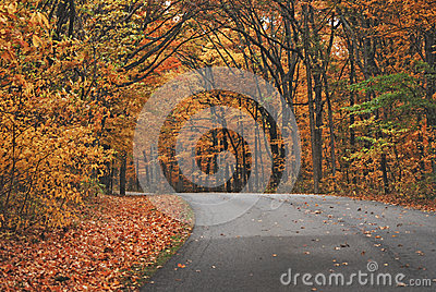 An orange pathway of trees in autumn at Brown County State Park.
