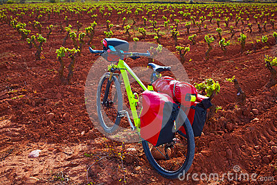 La Rioja vineyard bike The Way of Saint James