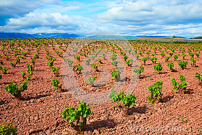 La Rioja vineyard fields in The Way of Saint James