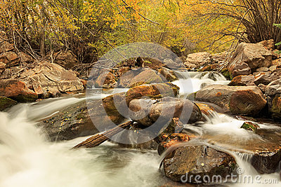 Yellow fall color by a stream in the Utah mountains.