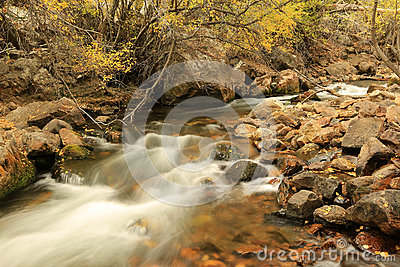 Golden fall color by a stream in the Utah mountains.