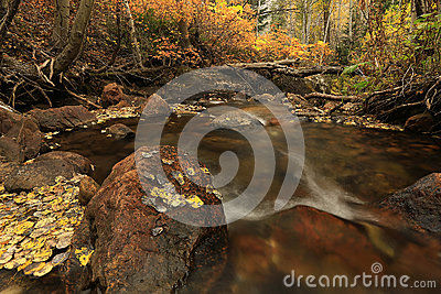Fall color by a stream in the Utah mountains.
