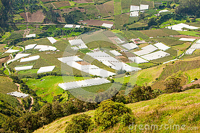 Greenhouses In Andes