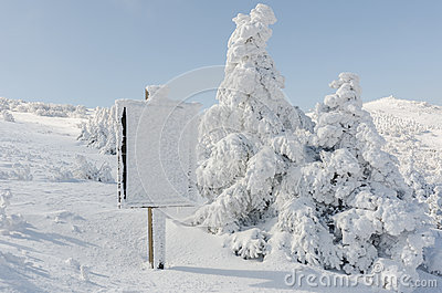 Winter white snow. Christmas background with snowy fir trees the most beautiful landscape,Sobaeksan Mountain in Korea