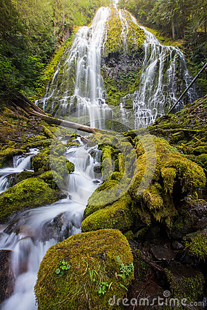 Proxy falls and mossy logs in Oregon