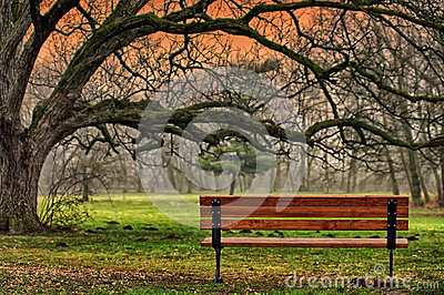 Autumn landscape. The tranquility of the park. Romantic and peaceful place. Autumn background
