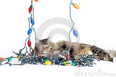 Cat Tangled Christmas Lights