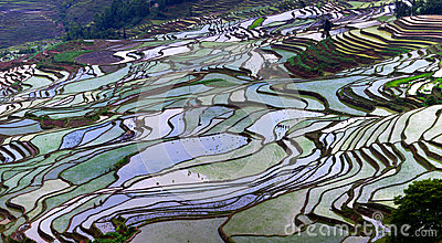 Terraced rice fields in Yunnan province, China