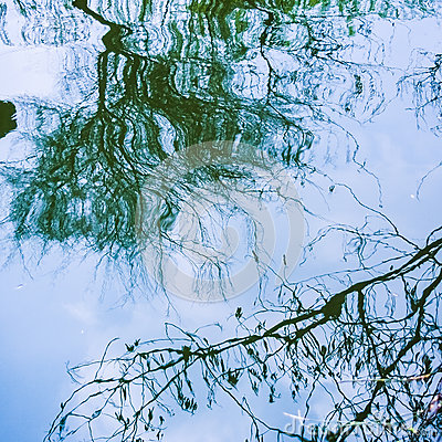 Reflection of tree branch on the surface of water