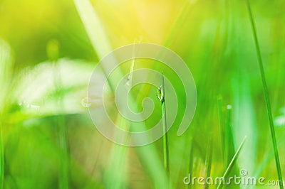 Macro image of drop on the grass, small depth of field