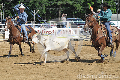 Marshfield, Massachusetts - June 24, 2012: Two Rodeo Cowboys Trying To Rope A Running Steer