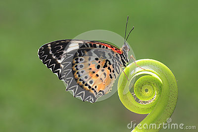 A butterfly on the green leaf