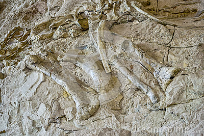 Ancient dinosaur bones embedded in rocky valley wall