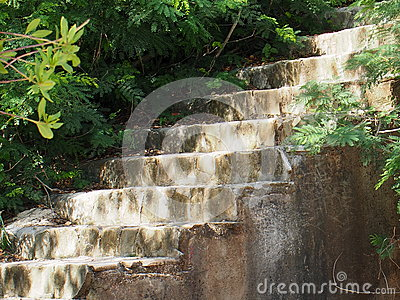 Stairs With Vegetation In Cuba