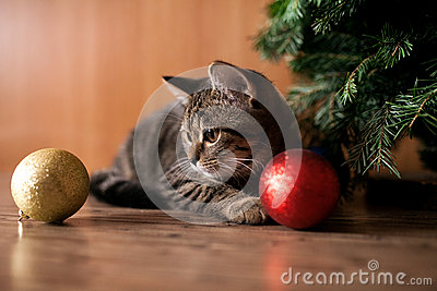Cat play with holiday balls