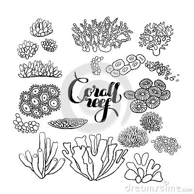 Collection Of Coral Reef Elements