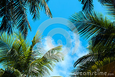 Blue sky with a few clouds and palm trees