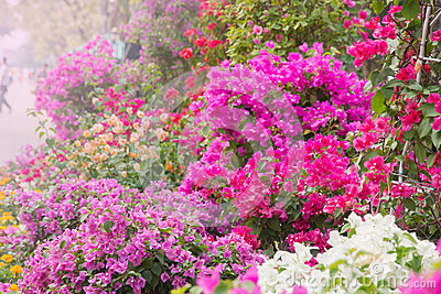 Colourful flowers decorative in the garden
