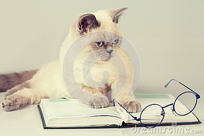 Cat with glasses and book