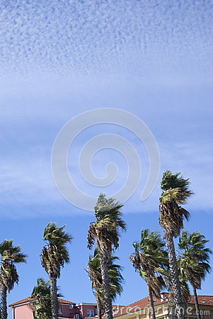 Wind blowing palm trees