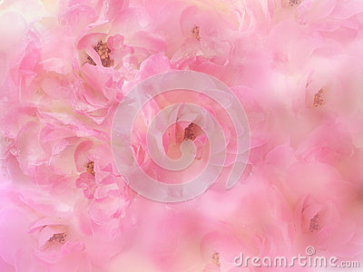 beautiful pink roses flower border with blur background