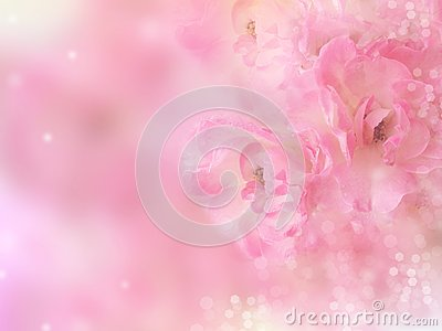 pink roses flower border with bokeh blur background