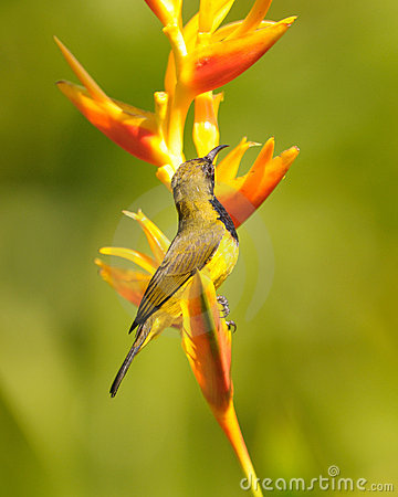 Sunbird on flower