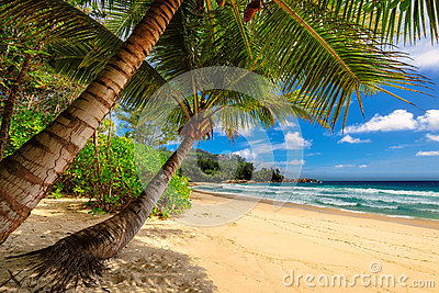 Tropical palms beach in Jamaica on Caribbean sea