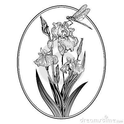Vintage elegant flowers. Black and white vector illustration. Iris flower. Botany.