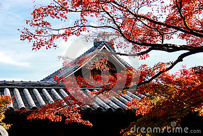 Temple roof with Japanese maple tree in foreground Autumn