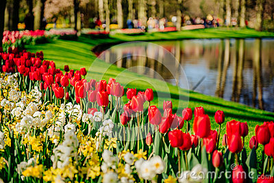 A lovely spring landscape park. Blooming flowers.