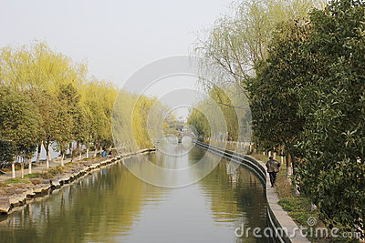 Willow strenghth the branch with leaves on the river(Jiaxing,China)