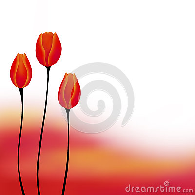 Abstract background red yellow tulip flower illustration