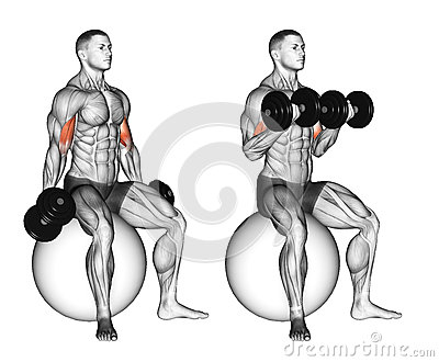 Exercising. Biceps curls seated on stability ball
