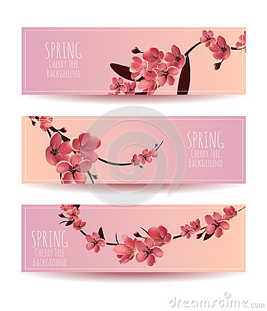 Sakura, Cherry Blossoming Tree Vector Background Illustartion.