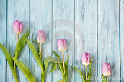 Row of bright pink tulips on blue wooden background, top view
