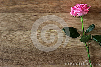 Beautiful pink rose flower with on rustic wood  background.