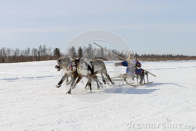 Races on reindeer sled in the Reindeer Herder's Day on Yamal