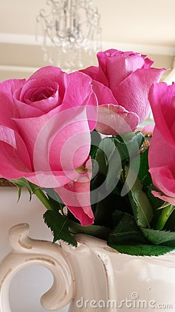 Beautiful pink roses in a cream jug