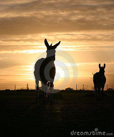 Donkey in the Sunset